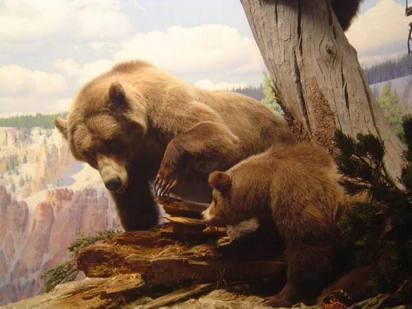 Пещерна мечка с потомство