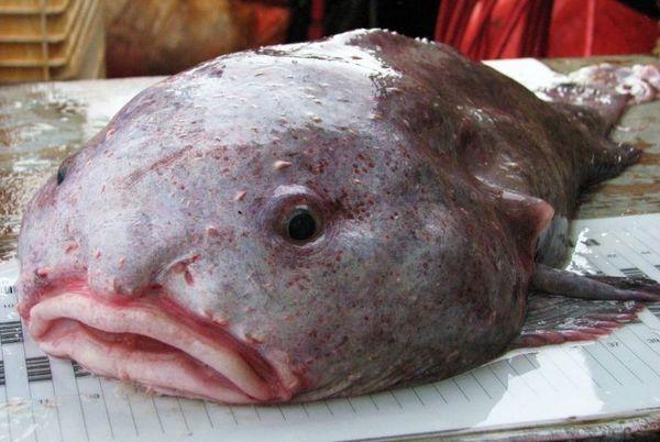 Chytená kvapka rýb