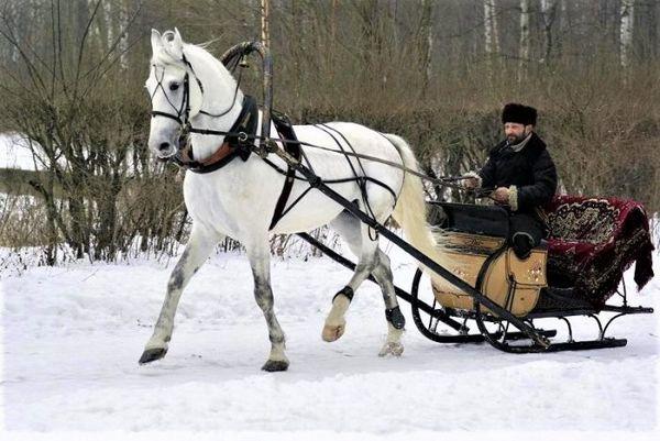 Рисисті бігу - особливості проведення випробувань коней на жвавість