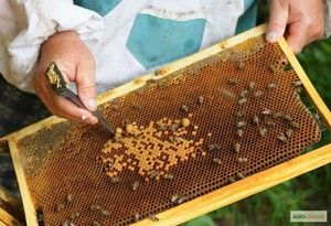 Kde začať s chovom včiel doma od nuly