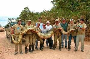 Najväčšie hady na svete