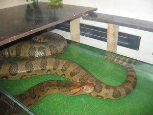 Nebezpečné hady