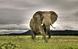 Slon je jedným z najväčších a najmocnejších zvierat