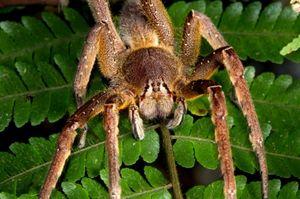 Najväčší a najnebezpečnejší pavúky na svete