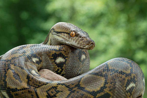 Had na zelenom pozadí