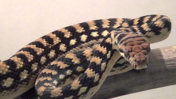 Ametyst Python