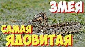 Jedovaté hady - čo sú zač