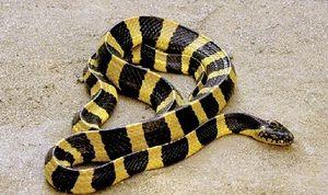 Fakty o hadovi - ako rozlíšiť jedovaté