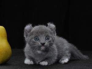 Котки от малки породи