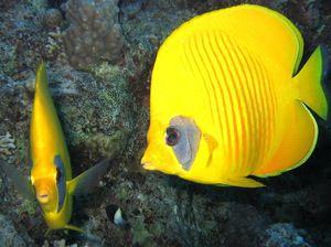 Najobľúbenejšie druhy morských rýb