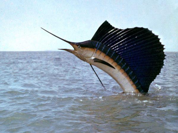 Ryby a ich odrody