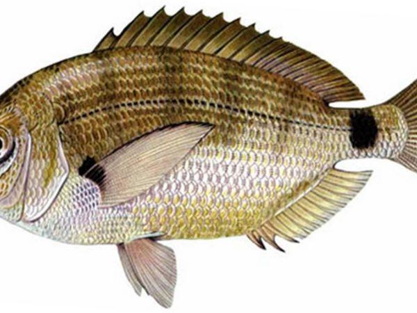 Príklad rôznych druhov rýb