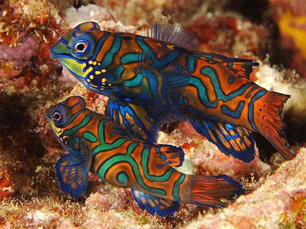 Popis najkrajších morských rýb