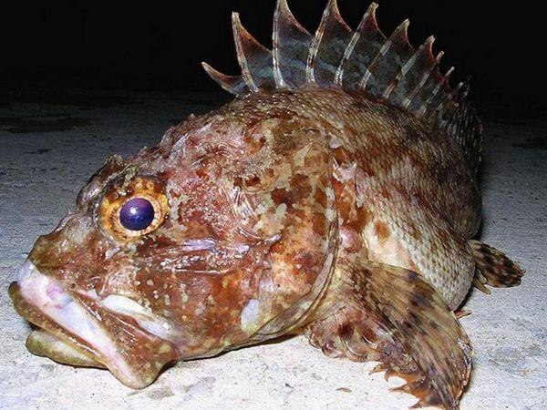 Kŕdeľ krásnych morských rýb