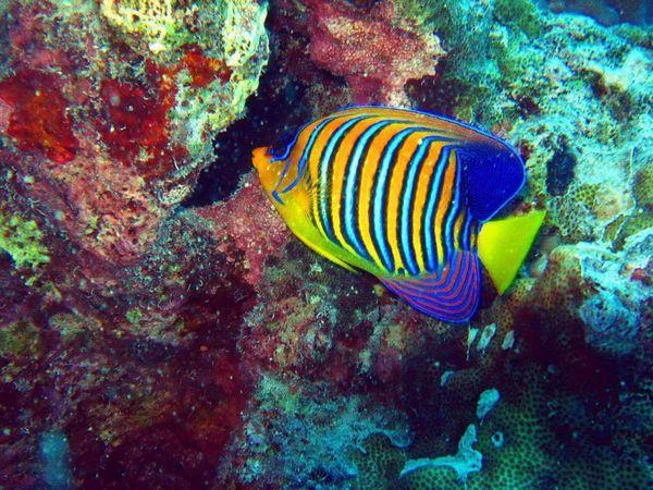 Populárne druhy morských rýb