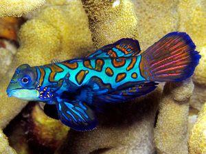 Názov morských rýb