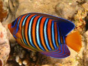 Stanovenie druhu morských rýb
