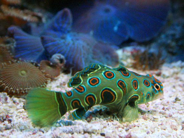 Ako určiť druh morských rýb