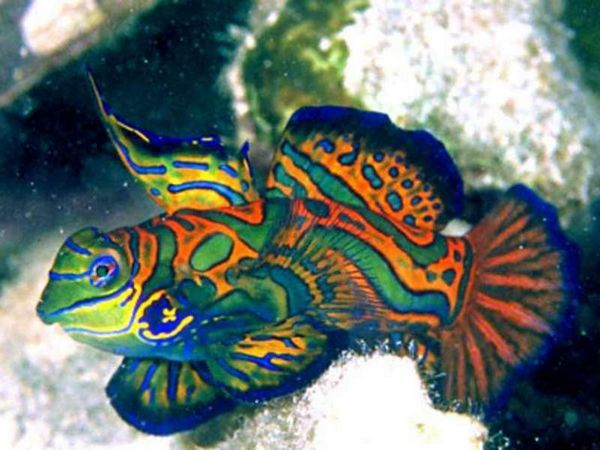 Ako sa volá morská ryba