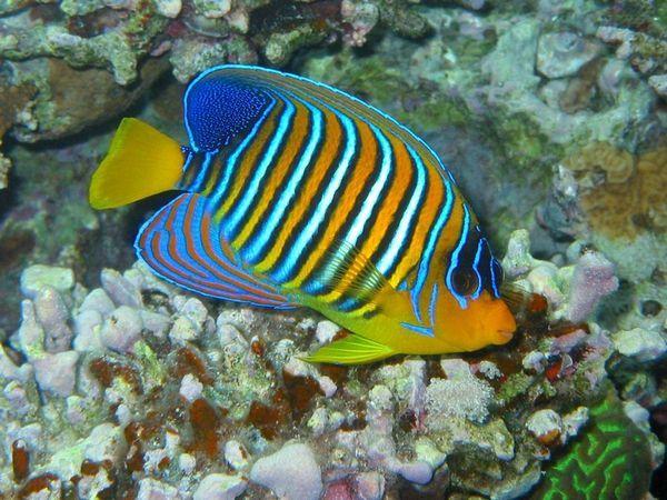 Krásne morské ryby