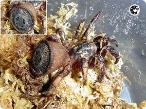 Najdesivejšie pavúky na svete