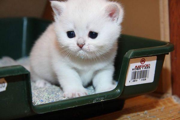 Mačiatko v tácke so silikagélovým plnidlom