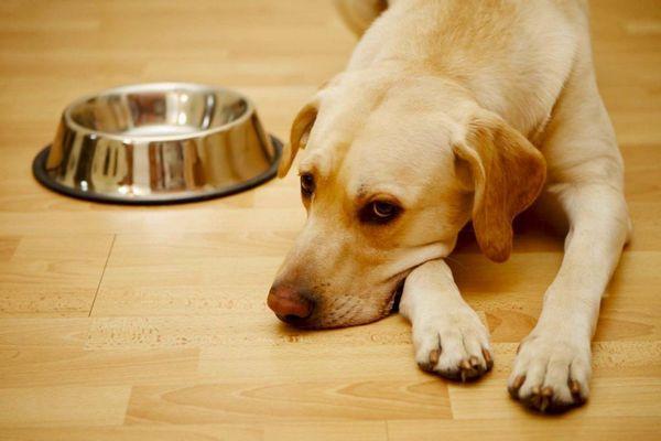 Najdôležitejším príznakom choroby psa je kašeľ.