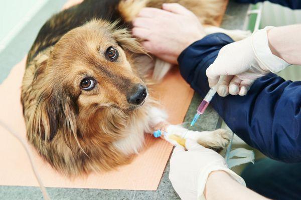 Okrem liečby je psovi pridelená špeciálna strava.