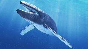 Modrá veľryba je najväčšie zviera