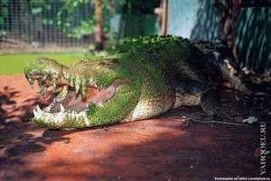 Biotop krokodílov