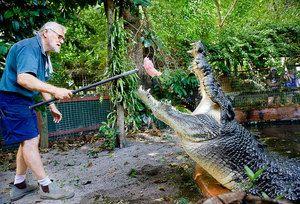 Je možné chovať krokodíly