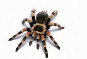Koľko nôh má pavúk a prečo nie je všetko také jednoduché