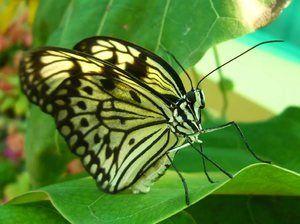 Koľko nôh má motýľ. Počet nôh