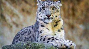 Характер на снежен леопард