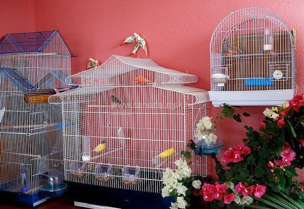 Клетка с играчки за канарчета