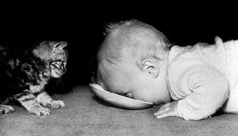 Съвети за възпитание на котенца