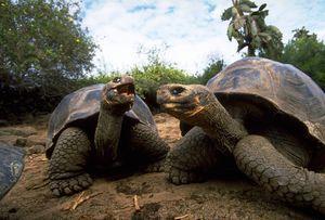 Druhy korytnačiek