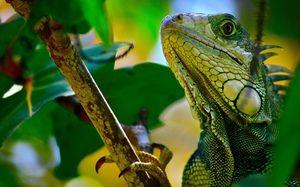 Krokodíly a korytnačky z triedy plazov
