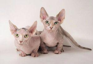 Стерилизация на котки и кастрация на котки