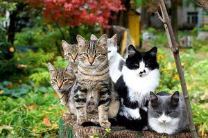 хвороби кішок