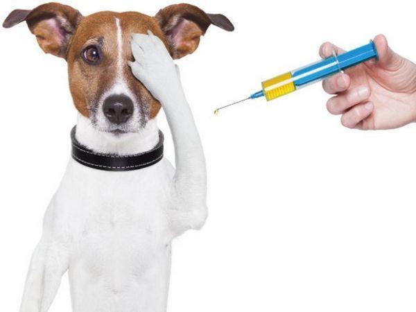 лікування собаки
