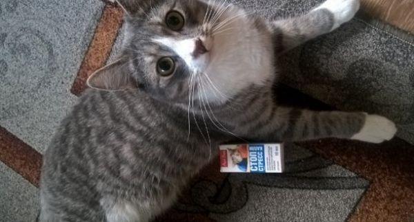 «Стоп-стрес» для кішок