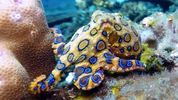 Chobotnica s modrým krúžkom