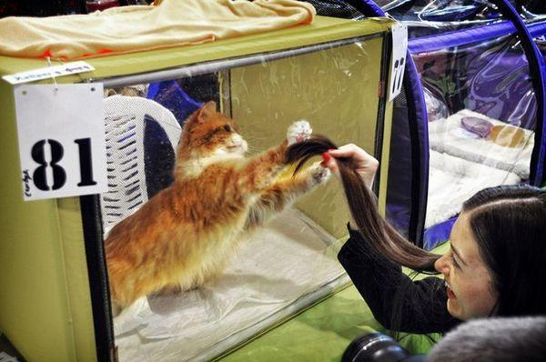 котки, кучета, котешка изложба, аквариум