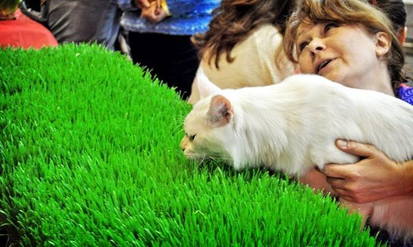 кучешка изложба, къде да отида с деца, животни
