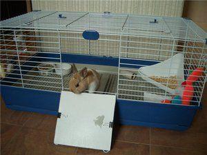 Умови для декоративних кроликів в будинку: як годувати