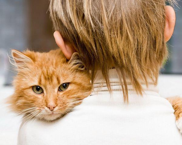 Ще се разбира ли котка с малко дете в къщата?
