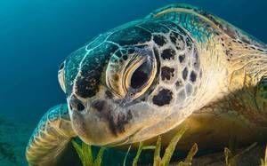Кістки черепа черепахи показані на фото