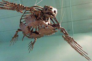 Скелет черепахи - Особливості