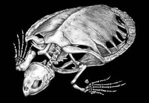 Знімок скелета черепахи